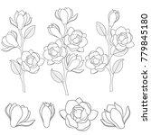 set of black and white... | Shutterstock .eps vector #779845180