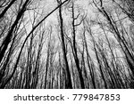winter trees landscape  | Shutterstock . vector #779847853