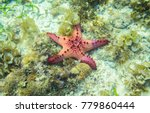 starfish on the bottom | Shutterstock . vector #779860444