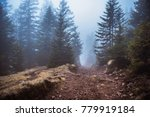 mysterious path. mysterious... | Shutterstock . vector #779919184