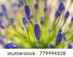 blue center piece | Shutterstock . vector #779994328