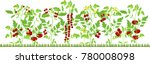 vegetable patch with fruiting... | Shutterstock .eps vector #780008098