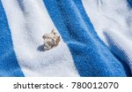 single hermit crab on blue and... | Shutterstock . vector #780012070