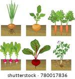 set of different vegetables... | Shutterstock .eps vector #780017836