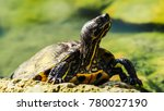 beautiful small turtles in a... | Shutterstock . vector #780027190