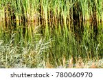 the dense packing of reeds in... | Shutterstock . vector #780060970