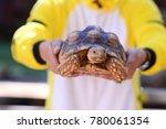 release the sulcata tortoise.  | Shutterstock . vector #780061354