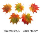 autumn maple leaves | Shutterstock . vector #780178009