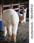 Small photo of Alpaca fluffy tail, back of alpaca