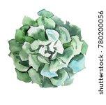 succulent illustration in...   Shutterstock . vector #780200056