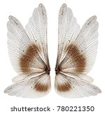 Insect wings isolated on white...