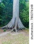 ceiba tree in national park... | Shutterstock . vector #780276148