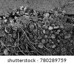 Scraps Of Natural Materials...