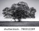 Solitary Majestic Tree