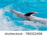 dolphins swimming in the clear... | Shutterstock . vector #780322408