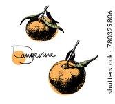 Hand Drawn Tangerine Set  Ink...