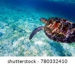 sea turtle above white sand sea ... | Shutterstock . vector #780332410