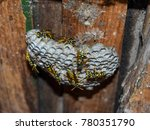 Wasp Nest With Wasps Sitting O...