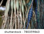 hanging fishing nets with small ... | Shutterstock . vector #780359863