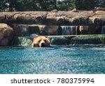 brown bear taking a break from... | Shutterstock . vector #780375994