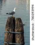 A Seagull Resting On A Wooden...