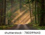 Sunlight Shining Through A...