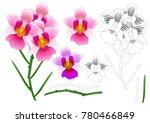 vanda miss joaquim orchid... | Shutterstock .eps vector #780466849