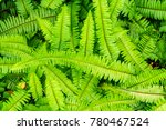 Green Native Fern Or...