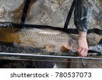 caught and release .  fisherman ... | Shutterstock . vector #780537073