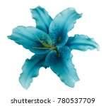Stock photo turquoise lily flower on a white isolated background with clipping path no shadows for design 780537709