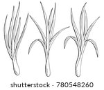 lemongrass plant graphic black... | Shutterstock .eps vector #780548260
