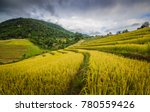pa pong piang rice terraced of... | Shutterstock . vector #780559426