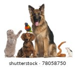 Stock photo group of animals in front of white background 78058750