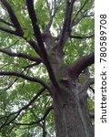 oak tree in kew garden | Shutterstock . vector #780589708