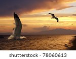 Two seagulls at sunset on a tropical beach - stock photo