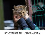 cat sit on a shelf in a cage in ... | Shutterstock . vector #780622459