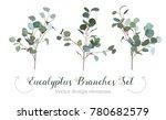 silver dollar eucalyptus... | Shutterstock .eps vector #780682579