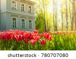 Lawn Of Red Tulips  Wooden...