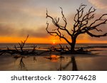 Driftwood And Dead Tree On An...