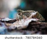 dead leaf skeleton macro | Shutterstock . vector #780784360