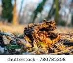 old dead branch in the middle... | Shutterstock . vector #780785308