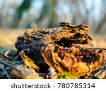 old dead branch in the middle... | Shutterstock . vector #780785314