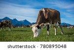 grazing dairy cow | Shutterstock . vector #780895048