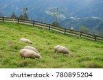 herd of sheep on green pasture. ...   Shutterstock . vector #780895204