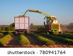 harvesting lavender plants in... | Shutterstock . vector #780941764