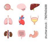 cartoon human internal organs... | Shutterstock .eps vector #780960688