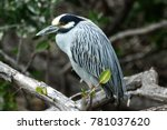 bird in baja california | Shutterstock . vector #781037620