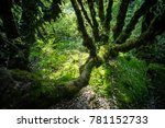 ang ka nature trail is tropical ... | Shutterstock . vector #781152733