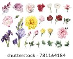 flowers and leaves  watercolor  ... | Shutterstock . vector #781164184