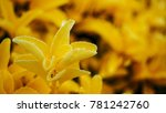 beautiful yellow flower closeup | Shutterstock . vector #781242760